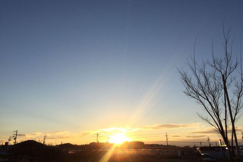 Sunset Tree Sky Sun 夕陽 空 太陽 樹