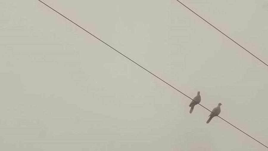Misty Mist Fog Foggy Sky Animal Birds Nature Couple Bored Grey Bnw_captures Bnw_society Bnwhungary Blackandwhite Hungary Békéscsaba Electricpylon Pigeon Art Mood