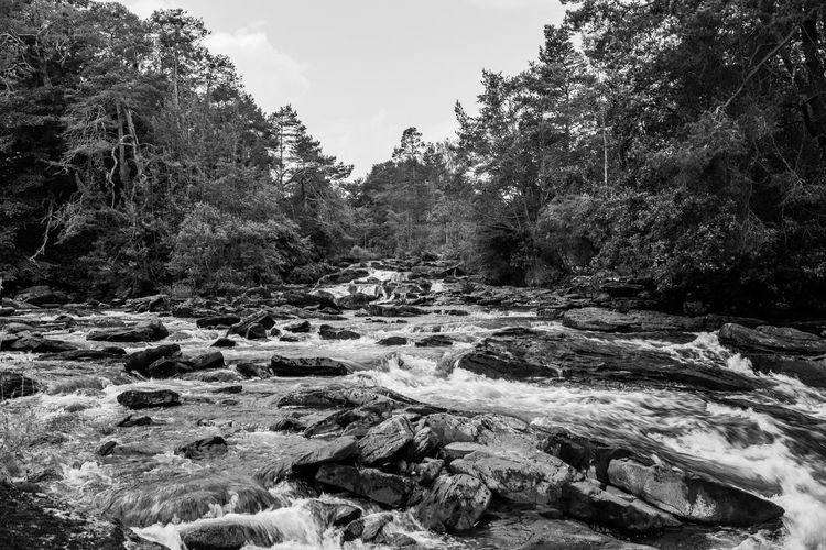 Lomography Neptune Convertible Art Lens System Black And White Blackandwhite Tree Rock Plant Water Rock - Object Beauty In Nature Nature Solid No People Forest Day Flowing Water Scenics - Nature River Land Flowing Tranquility Growth Non-urban Scene Outdoors