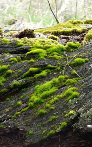 Moss Beauty In Nature Photography Outdoors Close-up Green
