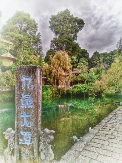Tree Water Text Day Growth Outdoors Nature No People Plant Sky Cloud - Sky Beauty In Nature 束河古镇
