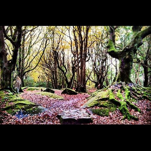 """The clearest way into the Universe is through forest wilderness."" ~John Muir Obsessed Forest Ethereal Iloveireland dontmakemeleave"