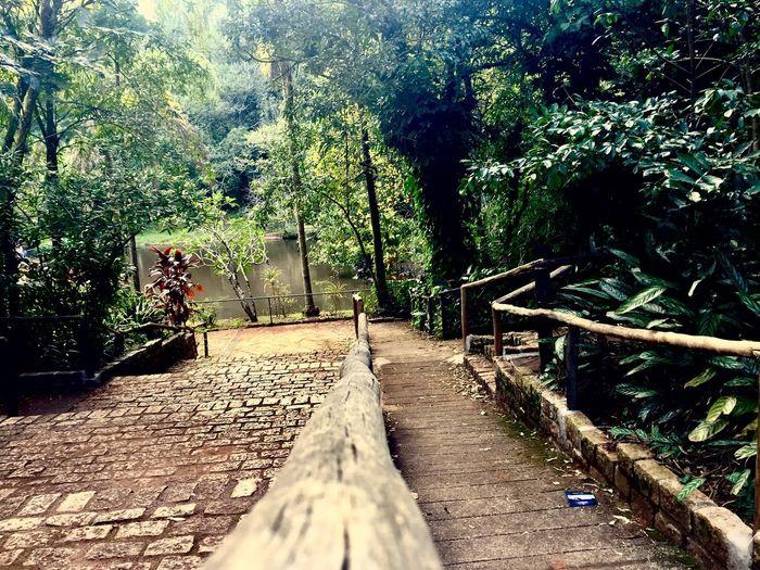 Caminhos Way