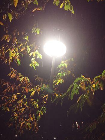Light City Lights Autumn