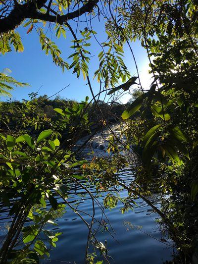 peace Nature