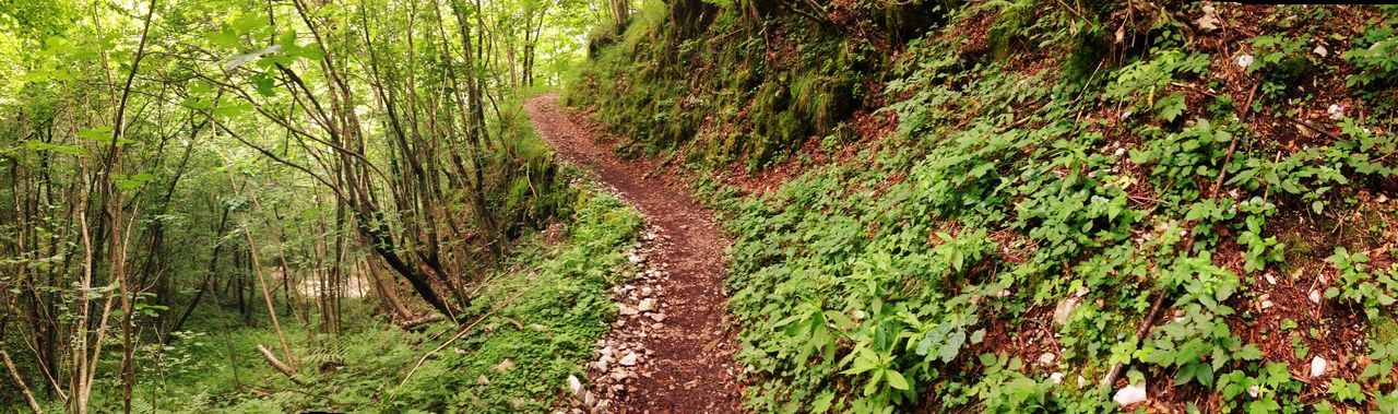 Panoramic Shot Of Trail In Forest