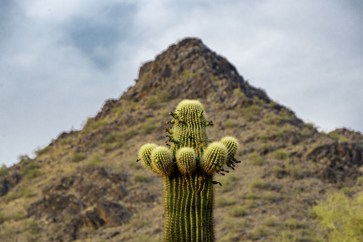 Cactus plant growing on land against sky