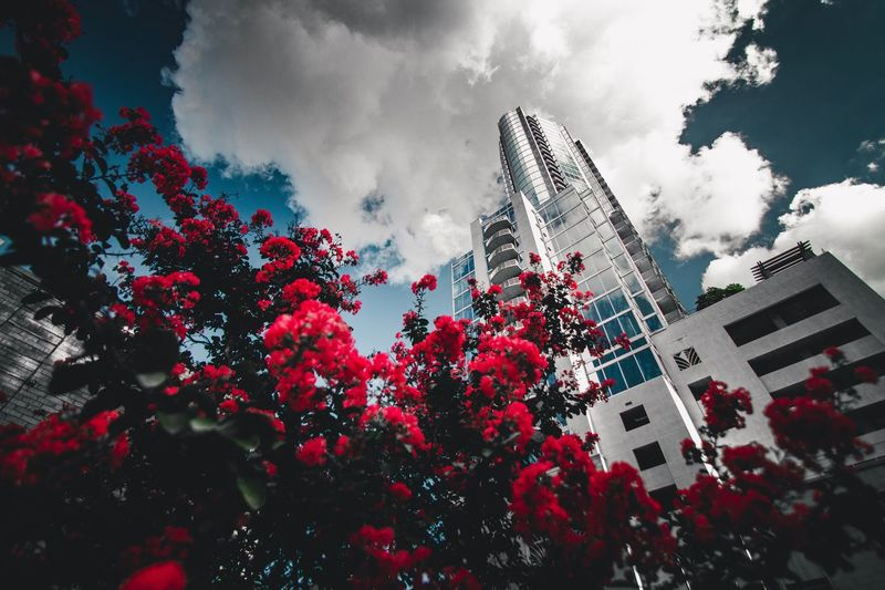 Flower Bomb. || Building Exterior Low Angle View Architecture Sky Tree Built Structure Cloud - Sky Day Growth Flower No People Outdoors Nature Skyscraper Beauty In Nature City Freshness