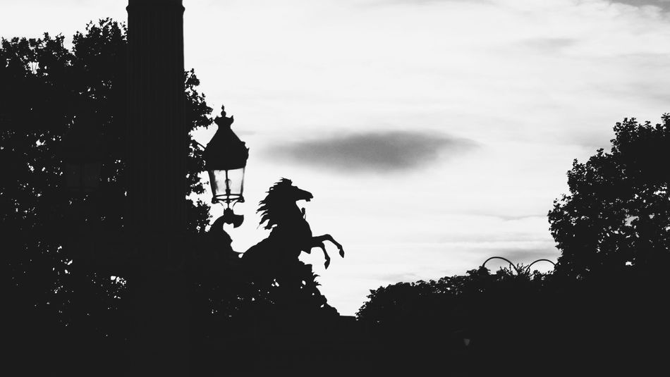 Horse Paris Park Sky Silhouette Tree Outdoors Lamp Street No People Paris, France  Love Paris Beauty In Detail Travelphotography Travel Destinations Happy Traveling Black And White Photography Blackandwhite Horse Wild Horse White Background EyeNewHere