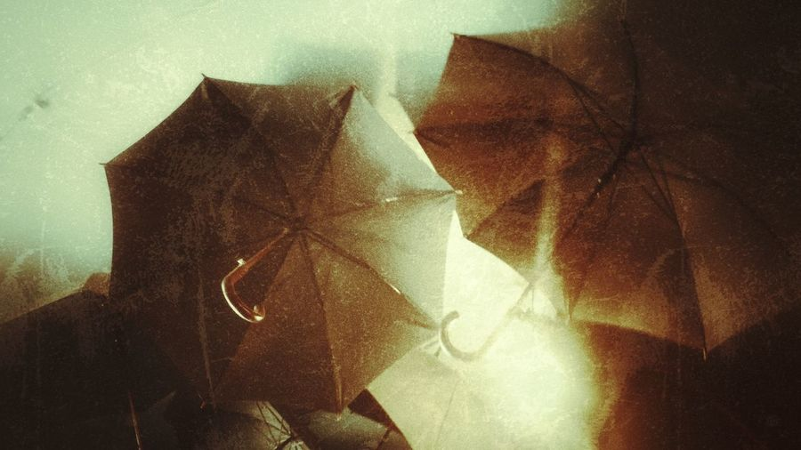 Low angle view of open umbrellas