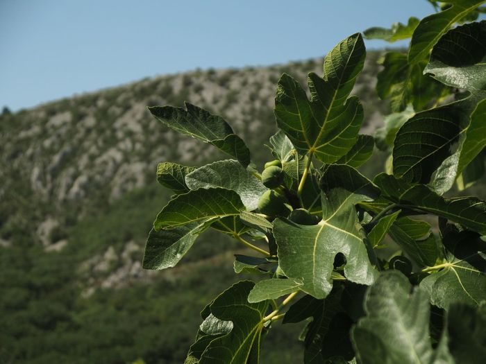 Close-up of fresh green plant against sky