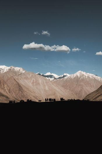 Camel rides in nubra valley, ladakh.