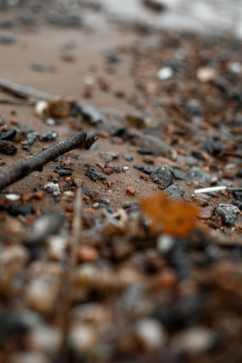 Selective Focus Nature No People Land Day Outdoors Close-up Surface Level Dirt Beach Solid Sand Textured  Tranquility Environment High Angle View Pollution Water Rock Environmental Issues Mud Gravel