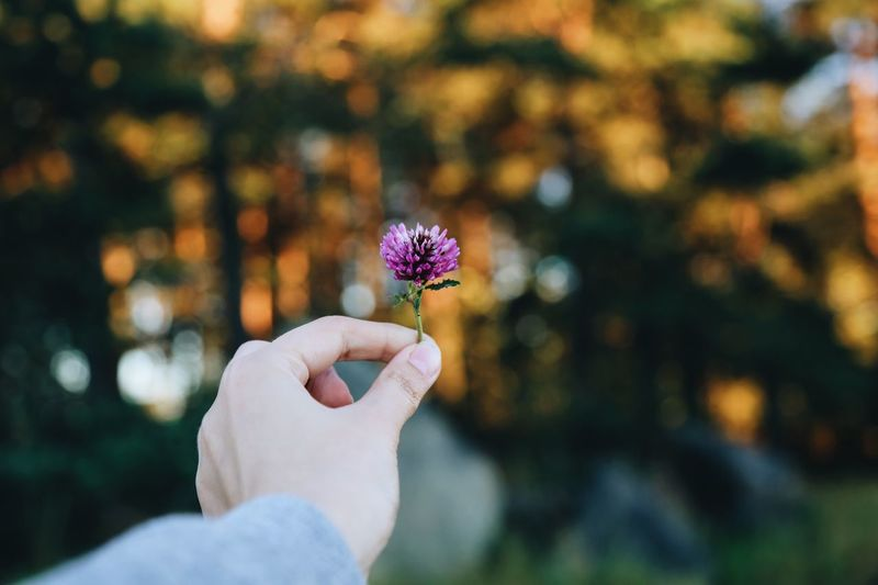Flower Person Holding Focus On Foreground Freshness Fragility Part Of Close-upCroppedll)] croppeBeauty In NaturerNaturerGrowthtSingle FlowereFlower HeadaPetalaHuman FingerePersonal PerspectivevBloomoDayaOutdoorsrs First Eyeem Photo
