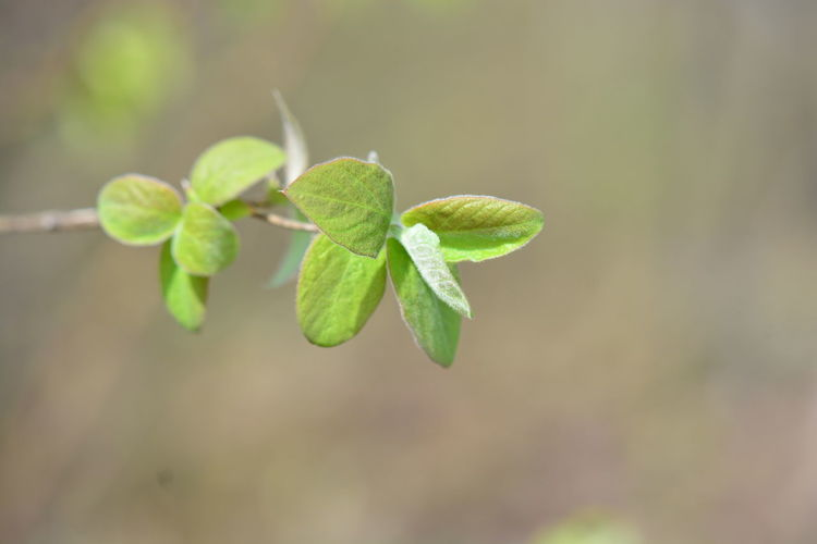Growth Plant Green Color Plant Part Leaf Close-up Nature Beauty In Nature No People Day Focus On Foreground Fragility Vulnerability  Freshness Beginnings Outdoors Selective Focus Tranquility New Life Plant Stem