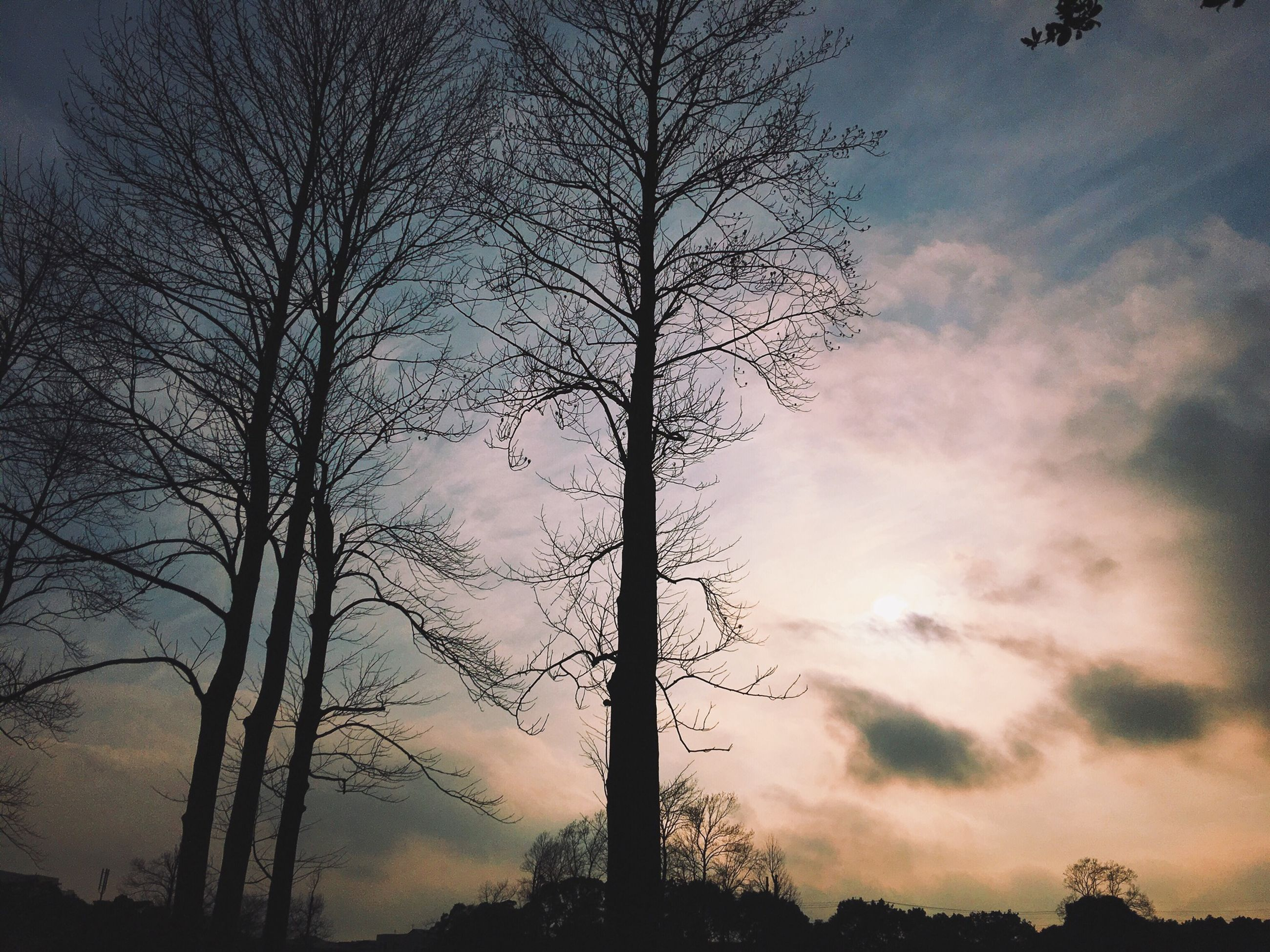 silhouette, tree, sky, low angle view, bare tree, tranquility, sunset, beauty in nature, scenics, cloud - sky, tranquil scene, nature, branch, tree trunk, cloudy, dusk, idyllic, cloud, outdoors, no people