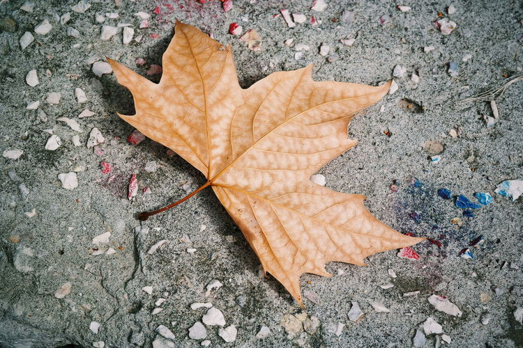 Photoshoot Tree Arancio Autumn Autunno  Beauty In Nature Change Close-up Color Day Dry Fallen Fragility High Angle View Leaf Maple Maple Leaf Nature No People Outdoors Photo Photograph Photographer Photography Photooftheday EyeEmNewHere