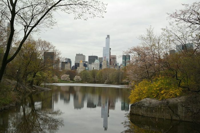 central park,nyc,sky line At Central Park