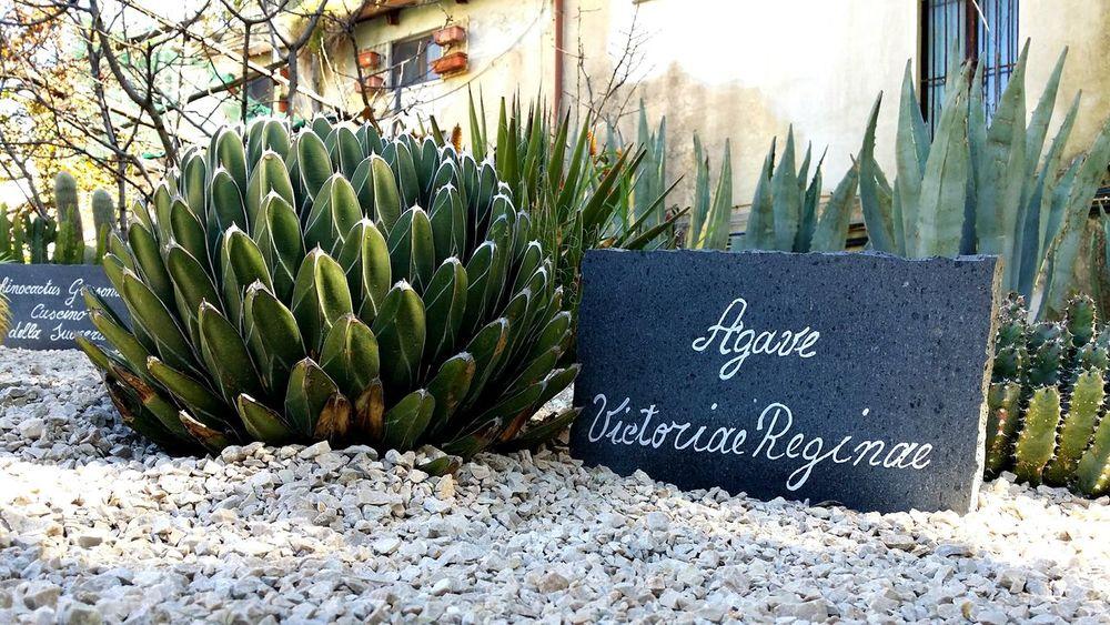 Sorrento, Italia EyeEmNewHere Plants 🌱 Sunlight Close-up Nature The Photojournalist - 2017 EyeEm Awards