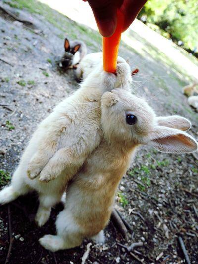 Rabit Happy Pretty Holiday Nature Japanese  Island Beautiful Animals Hirosima Cute Funny Dericious