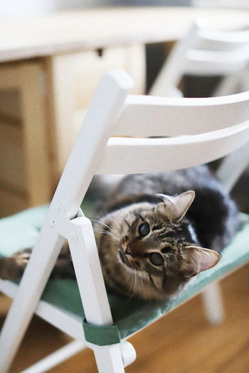Portrait of cat relaxing on chair