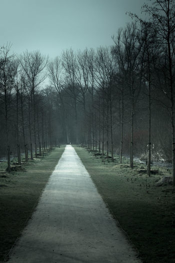 Beautiful Nature Cold Dramatic Forest Landscape Nature Park Road Tree Vanishing Point