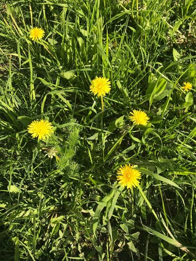 Plant Flower Flowering Plant Yellow Fragility Growth Beauty In Nature Nature Day Green Color Flower Head