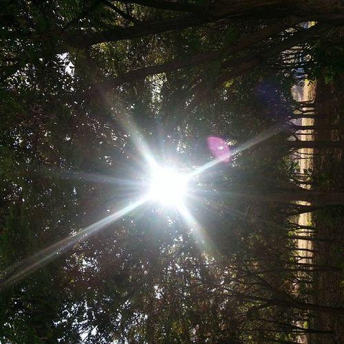 Sun Rises Sinshine