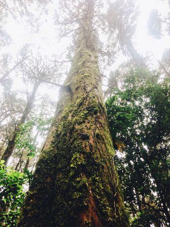 Trees Tall Bosque De La Hoja Look Up Pretty Green Brown Leave Beauty Nature Pretty Road Trip Costa Rica