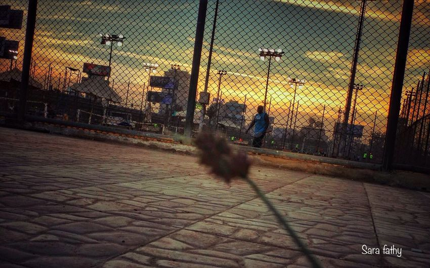 Beauty In Nature Walking One Animal Chainlink Fence Cobblestone Full Length One Person Men City Outdoors Adults Only Day Adult Summer 2016 IPhone Sky Sunset Cairo,egypt