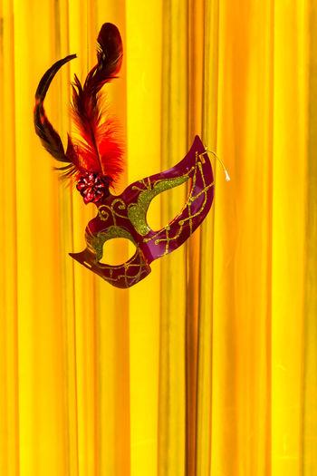 Close-up of orange feather on window