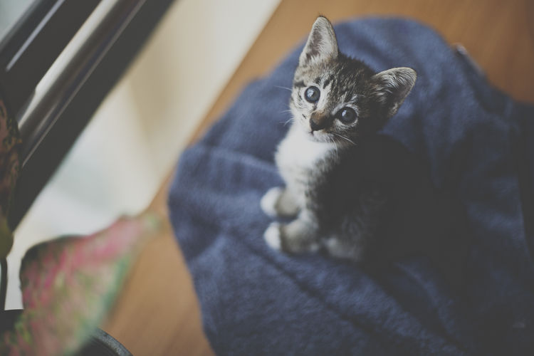 hi there Alertness Animal Animal Themes At Home Black Color Cat Cats Close-up Domestic Animals Domestic Cat Feline Focus On Foreground Gray Indoors  Kitten Kittens Looking At Camera Mammal No People One Animal Pets Portrait Selective Focus Whisker