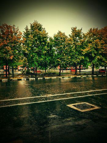 Tree Nature Outdoors Autumn Rain Scenics