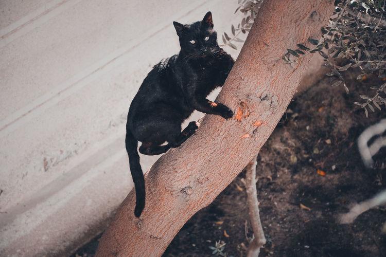 High angle view of black dog