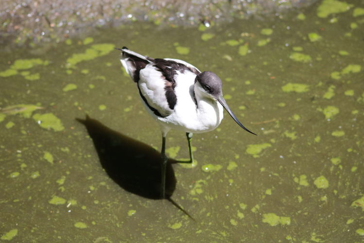 Close-up of bird standing in water