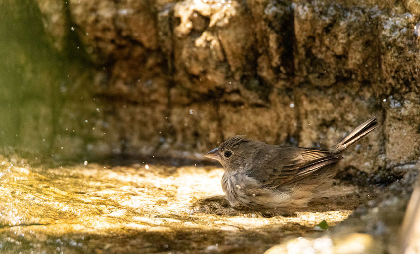 Close-up of bird perching on a water