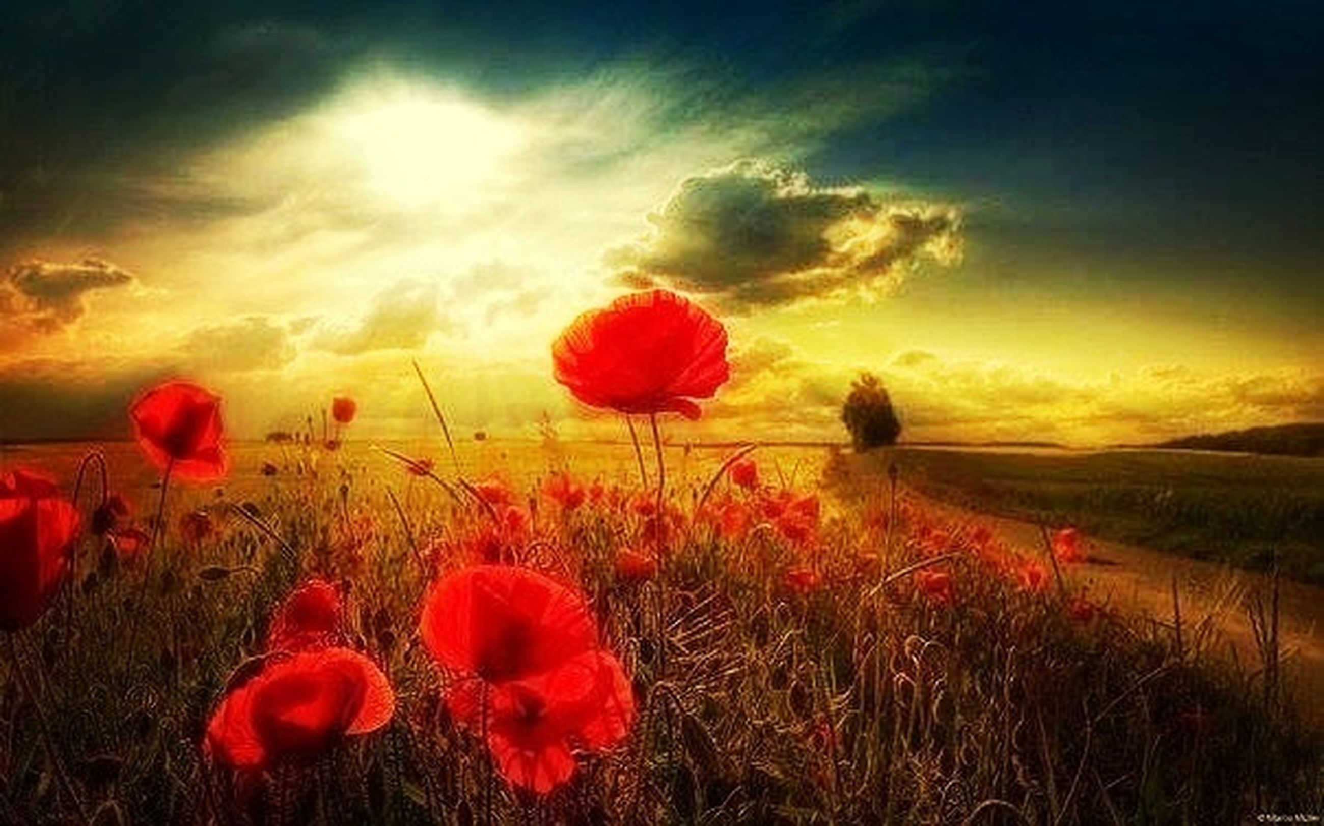 flower, field, freshness, beauty in nature, poppy, growth, sky, fragility, petal, landscape, red, nature, plant, sunset, flower head, cloud - sky, tranquil scene, blooming, tranquility, scenics