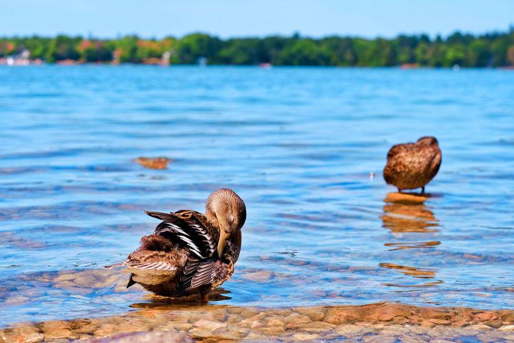 Ducks on rock in lake