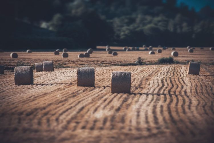 Hay bales on farm