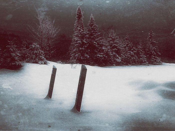 Stakes Snow