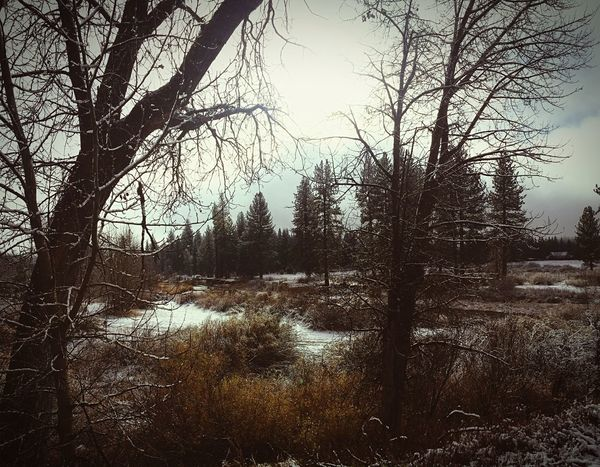 Winter Scene. IPhoneography Winter