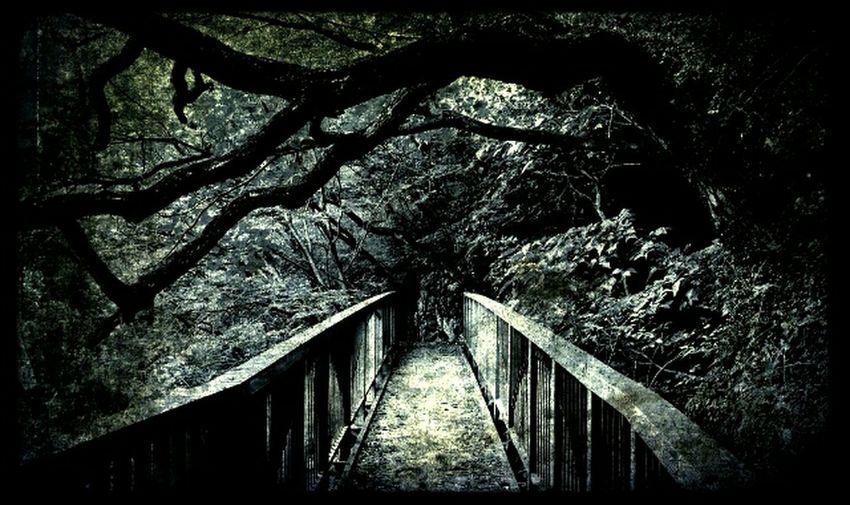 old Bridge Selfmaide