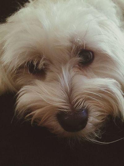 Mydogiscoolerthanyourkids Isis😍 Ilovemydog Mybaby❤ IPhoneography 🐶😍😍😍😍