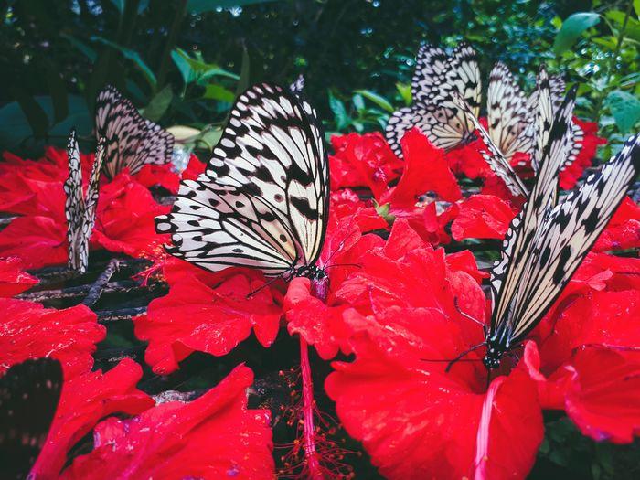 Butterfly Feasting on Nectar. Flower Nature Plant Close-up Butterfly - Insect Butterfly Red Insect First Eyeem Photo The Week On EyeEm