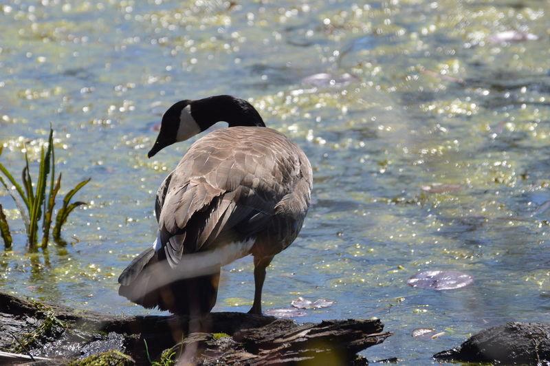 Bird perching on rock at lakeshore