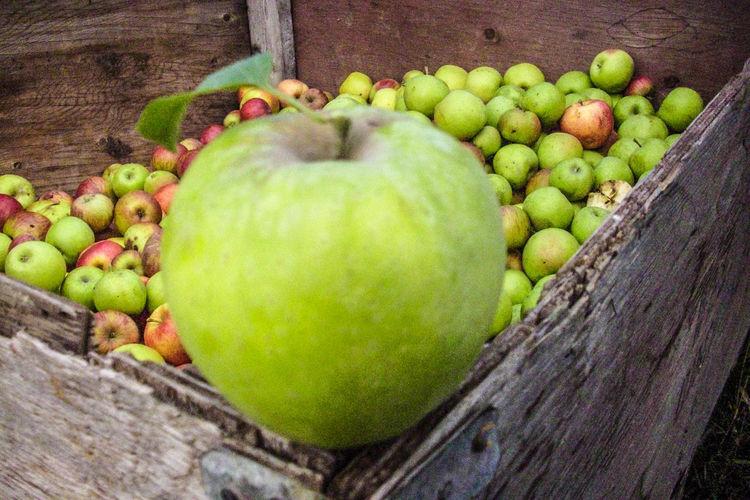 Apple - Fruit Applefarm Box Day Food Freshness Healthy Eating Nature No People Work