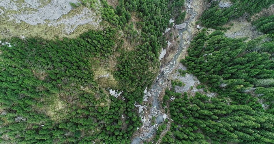 Building Exterior Summer Exploratorium Aerial Photography Picea Abies River Summer Exploratorium Aerial Shot Aerial View Backgrounds Full Frame Low Section High Angle View Grass Close-up Green Color LINE Plant Life