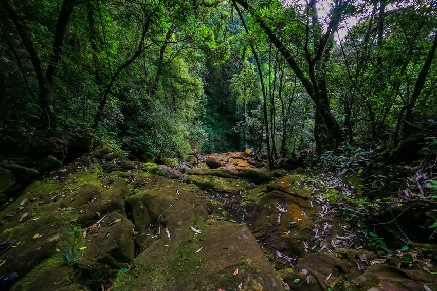 Streams in the forest Nature Tree Beauty In Nature Day Environment Forest Green Growth Landscape Lush Foliage Moss Nature No People Non-urban Scene Outdoors Rain Forest River Scenics Stream Tranquil Scene Tranquility Tree Water