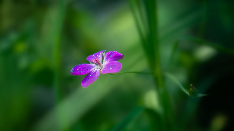 Beauty In Nature Blooming Close-up Day Flower Flower Head Focus On Foreground Fragility Freshness Green Color Growth Leaf Nature No People Outdoors Petal Plant