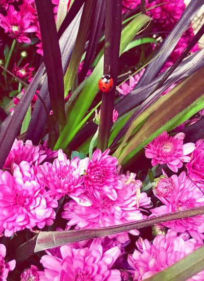The Little Things a Ladybug in my Gifted Flowers found this morning at my doorstep from a secret admirer